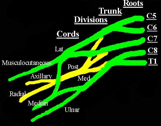 ArUn\'s MRI Protocols: MRI brachial plexus anatomy